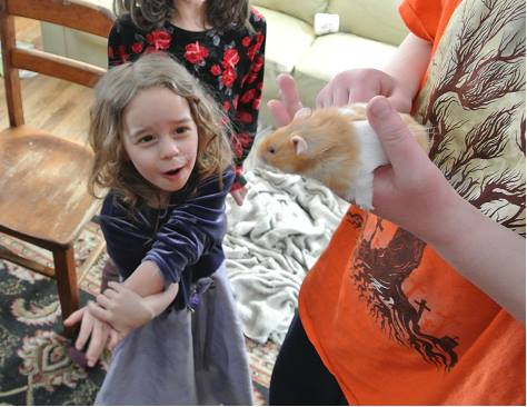 benny hamster