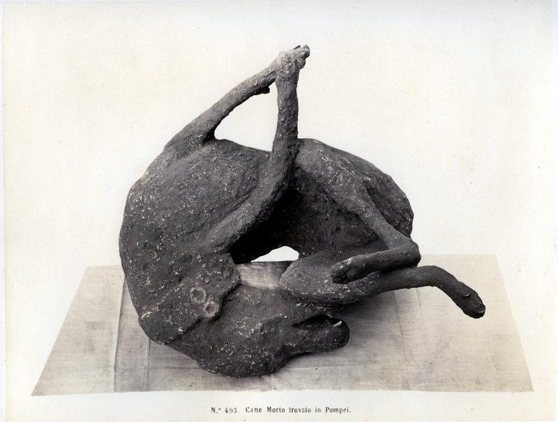 Rive,_Roberto_(18..-1889)_-_n._493_-_Cane_morto_trovato_in_Pompei